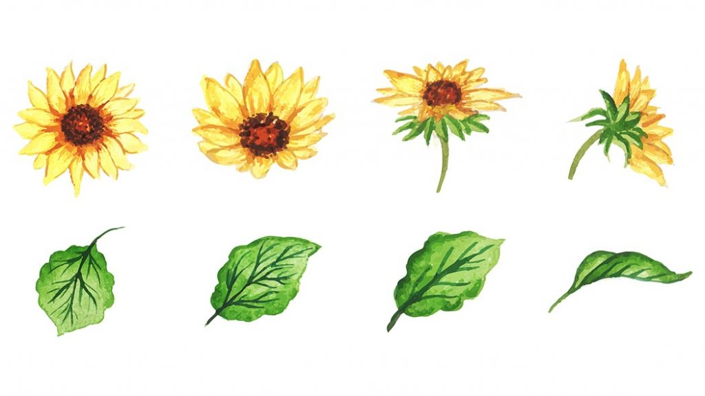 How to Paint Sunflowers in Watercolor